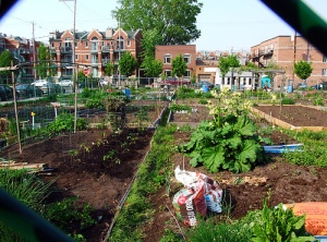 Source: www.celsias.com  - careers in urban agriculture